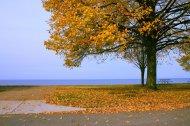 Jesień, fototapeta
